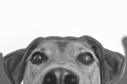 dog_1_sw
